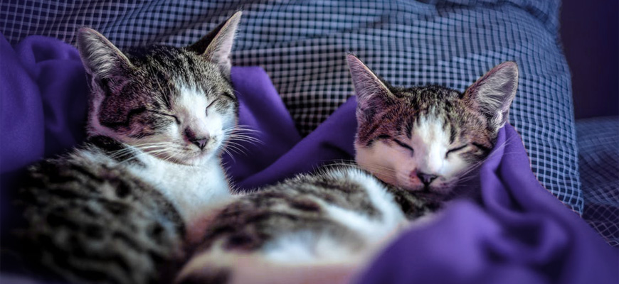 Deux chats en train de dormir paisiblement