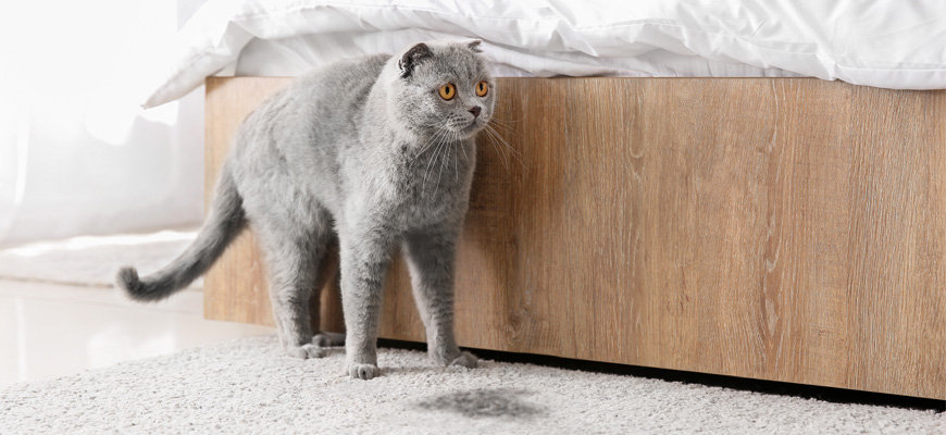 Chat gris allongé sur un tapis