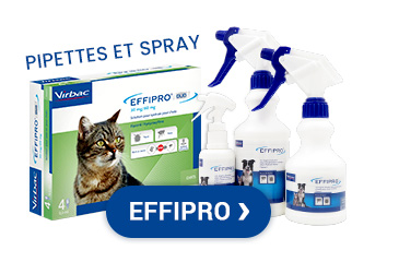 Effipro, solutions antiparasitaires pour chats