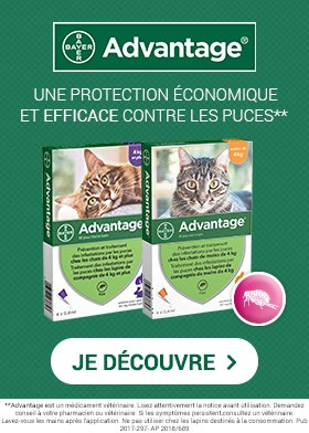 Advantage pour chat