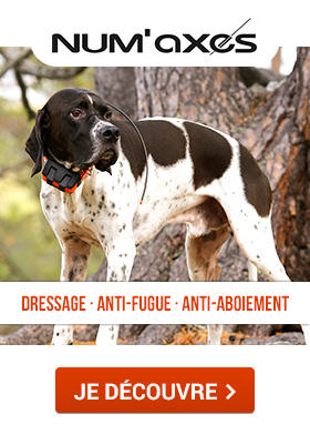 Numaxes : Dressage, anti-fugue, anti-aboiement